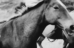 Horse photography, Black and White Horse Photography, Horses