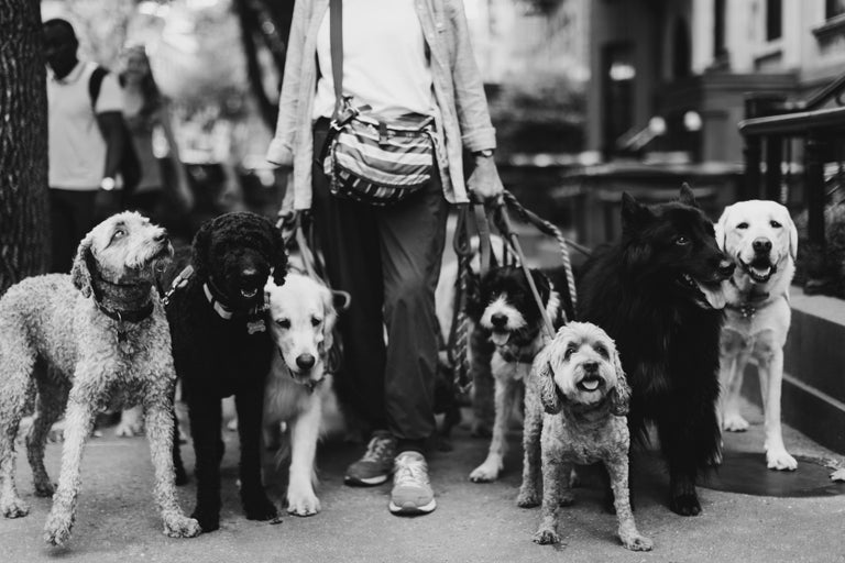 Addison Jones Black and White Photograph - Animal Pictures New York Street Photography: The Dog Walker 911 LIMITED EDITION