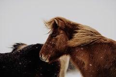 Wild Horse, Colored Horse Photography, HorseFine Art Photography Prints,horses