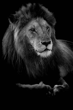 Profile of a King (Limited Edition of 10) - Animal Photography