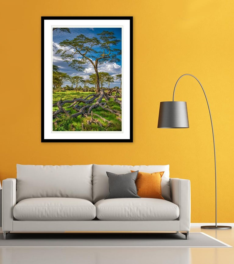The Yellow Acacia (Limited Edition of 25) - Nature Photography For Sale 1