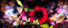 Gardens&Galaxies_Red Gerbera vivid colors flowers abstract night sky nature
