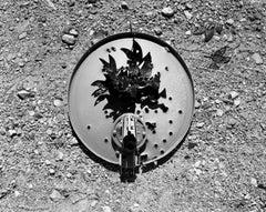 Untitled (Dove Dish)