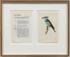 The Roller / conceptual drawing, bird identification, nuclear mutation, eyes
