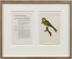 The Yellow Hammer / conceptual drawing, bird identification, nuclear mutation