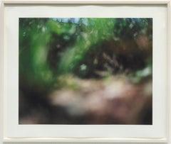 Tujunga 2 / Conceptual color photograph, nature,creation of reality, green, blue