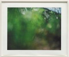 Tujunga 3 / Conceptual color photograph, nature,creation of reality, green, blue