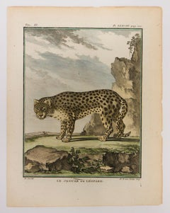 Le Jaquar ou Leopard