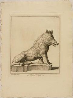Aper Calidonius