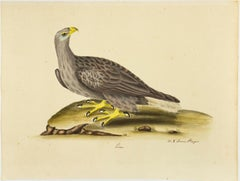 """Erne,"" Antique Bird Print"