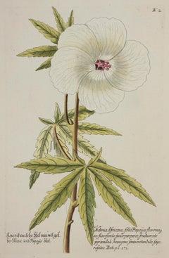 """American Ketmia Hibiscus,"" Vintage Botanical Print"