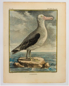 L'Albatross