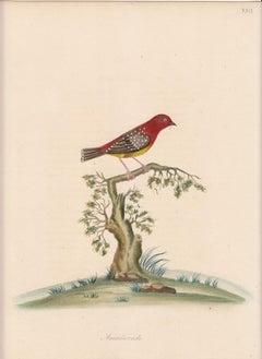 Engraving Animal Prints