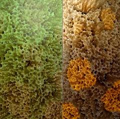 Nebula Sponge