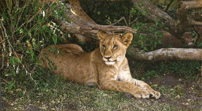Lion Cub - Painting by Tony Karpinski