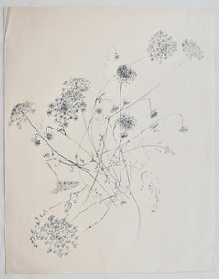 """""""Queen Anne's Lace"""" 1966, Ink on Paper"""
