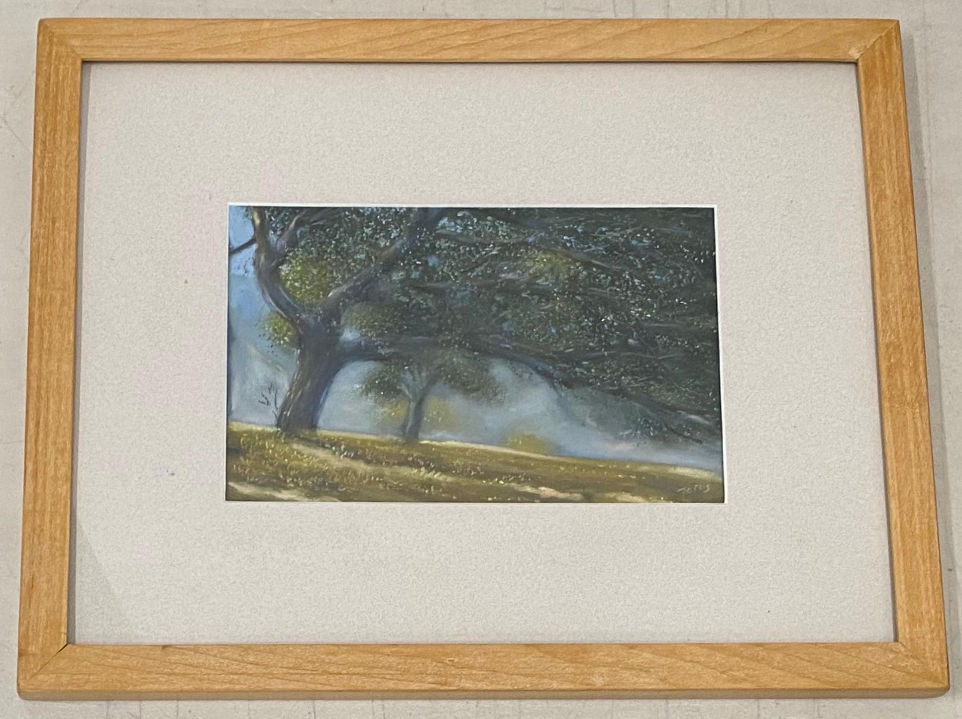 Paul Fortis Windswept Trees Original Pastel
