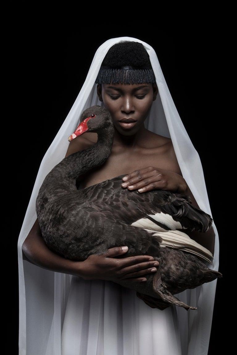 Justin Dingwall Portrait Print - 'This is a black swan', photographic gliclée print on 100% cotton fine art paper