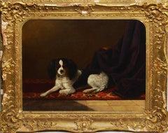 Classic English Portrait of a Spaniel Dog by Thomas Grimshaw