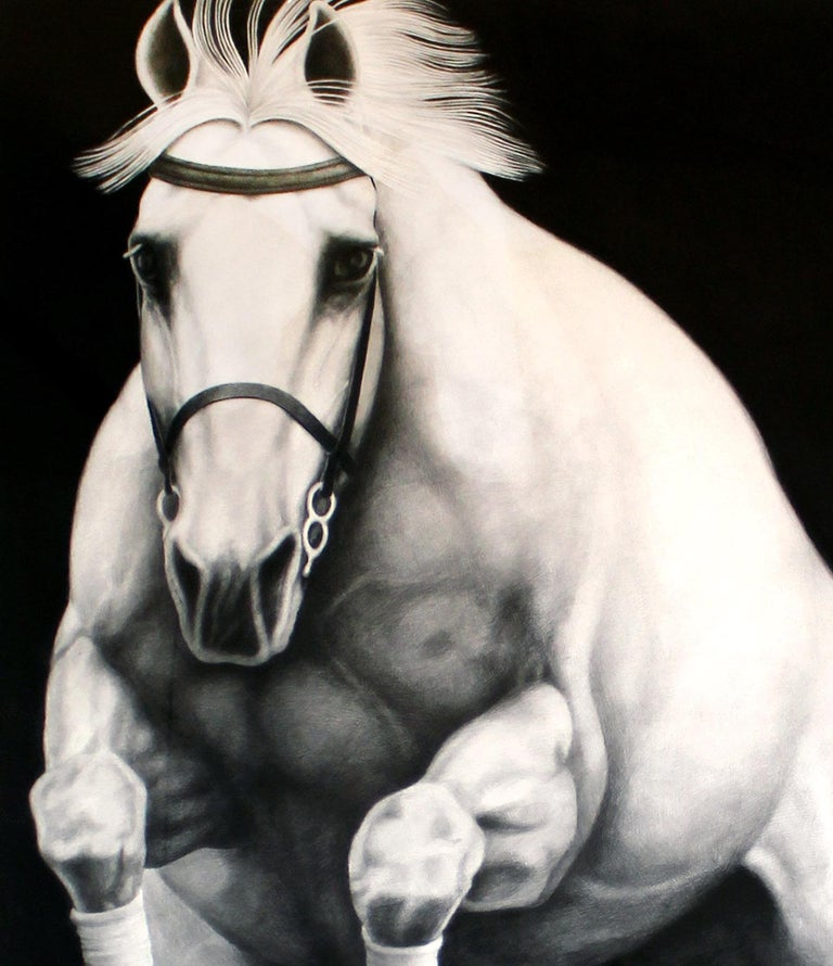 Hyperrealist Contemporary Horse Graphite Drawing Joseph Piccillo Framed B&W 3
