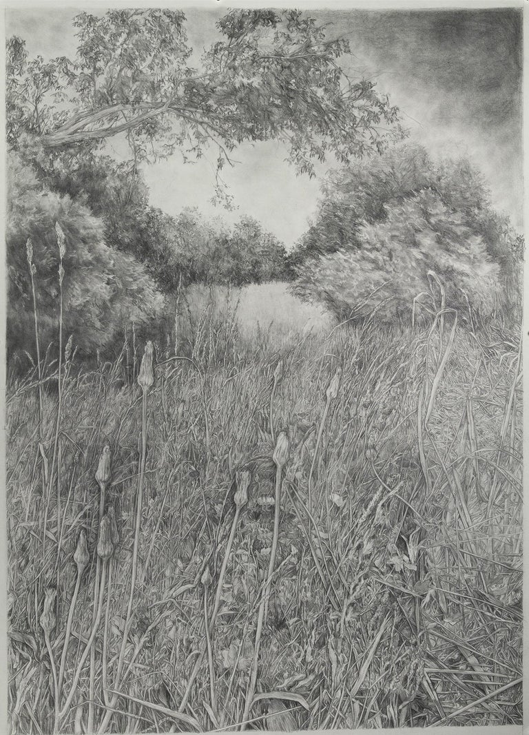 Amanda Besl Landscape Art - Conceptual Realist Drawing Floral Wheat Delicate Detailed American female artist