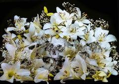 Lilien - Photography, flowers, vanity, stilllfe, fine art, contemporary art