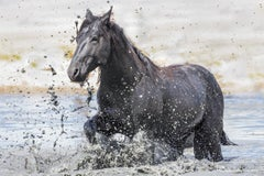 """Splash"" Photograph, Guillermo Avila, Wild American Horse, Mustang in Water"