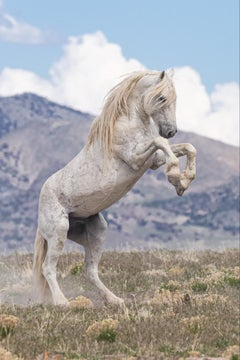 """Old Man"" Photograph, Guillermo Avila, Wild American Horse, White Stallion"