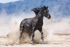 """Stomp"" Photograph, Guillermo Avila, Wild American Horse, Mustang Action"