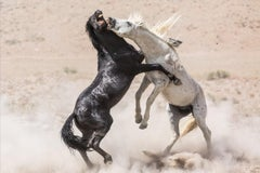 """Mustang Power"" Photograph, Guillermo Avila, Wild American Horse, Stallions"