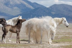 """Baby Powder"" Photograph, Guillermo Avila, Wild American Horse Series"