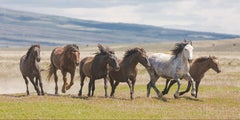 """""""Mustang Freedom"""" Photograph, Guillermo Avila, Western Wild American Horse"""