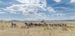 """Summer Lead"" Photograph, Guillermo Avila, Wild American Horse Herd, Utah"