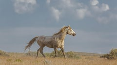 """Summer Glow"" Photograph, Guillermo Avila, Western American Wild Horse"