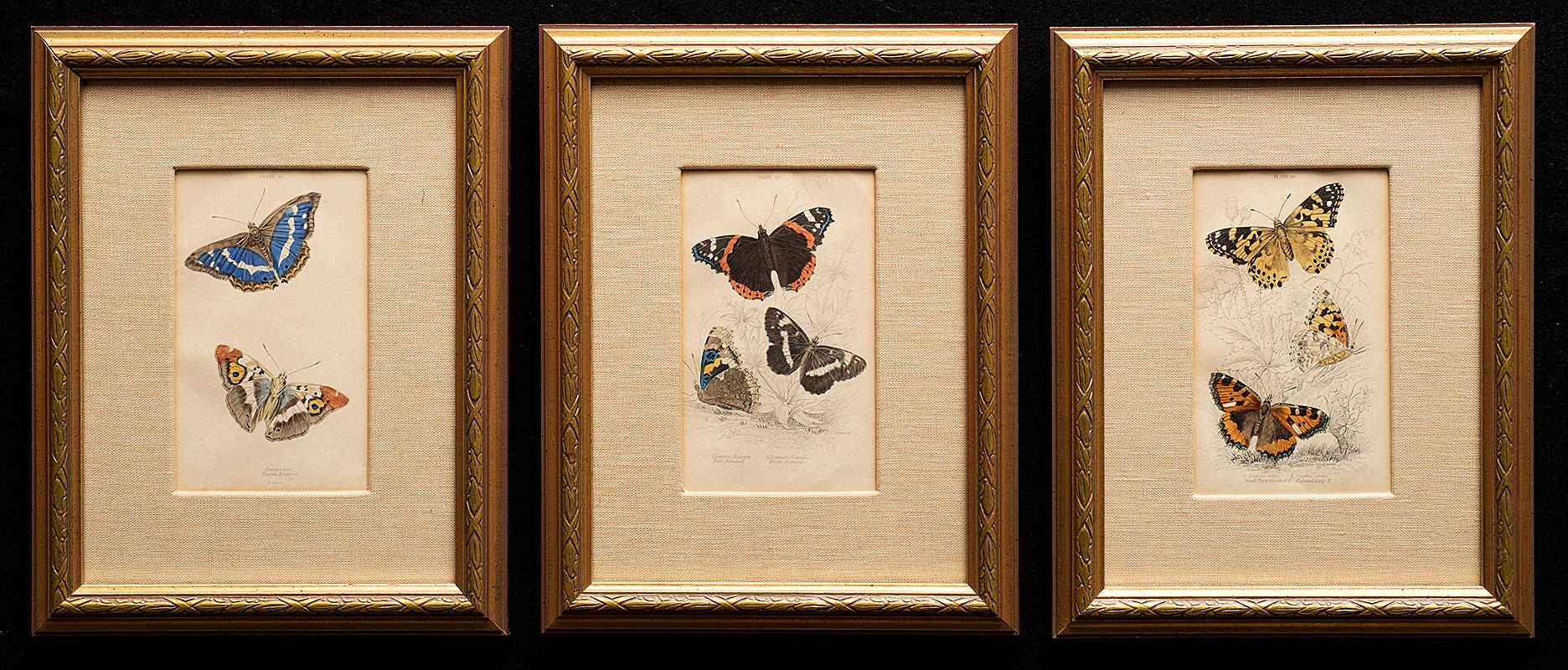 3 Hand-Colored Prints: Purple Emperor, Small Tortoise Shell, Red & White Admiral