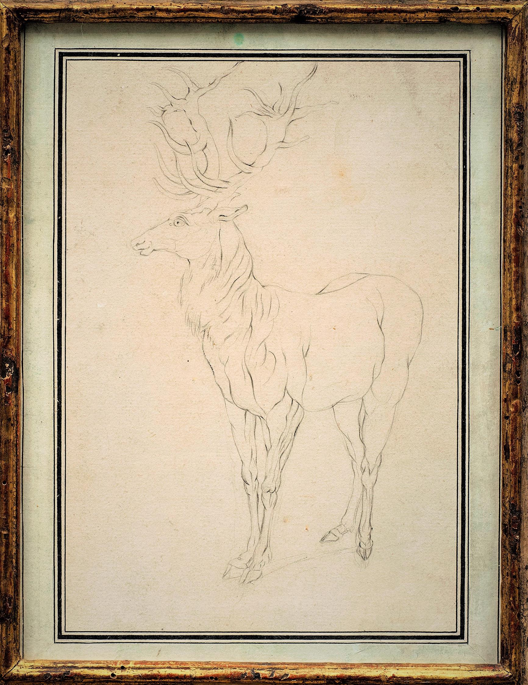 """Drawing: """"Stag Looking Left"""" by Johann Elias Ridinger (German 1698-1767)"""