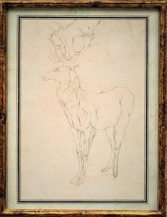 18th Century Animal Drawings and Watercolors