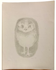 (Young Owl)