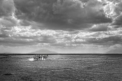 Zebra Infinity - Michel Ghatan, landscape, wildlife, black and white, 36x48 in