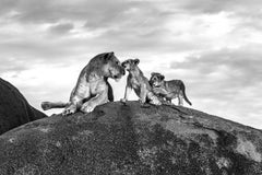 Lioness and Cubs on Kopje - Michel Ghatan, wildlife, black and white, 40x60 in