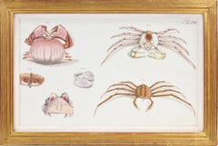 HERBST. A Group of Six Crustraceans: Crabs
