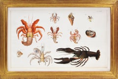 HERBST. A Group of Four Crustaceans