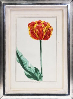 BUCHOZ. A Group of Six Tulips
