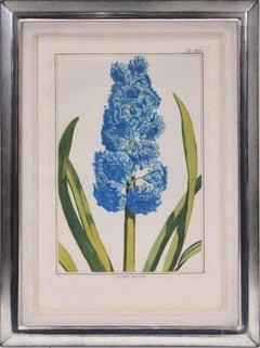 BUCHOZ. A Group of Six Hyacinths