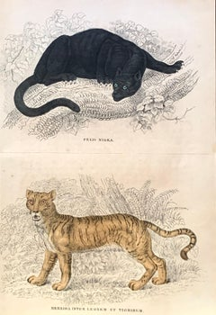 Antique Hand Coloured Black Puma and Liger Print - William Jardine - Tiger Lion