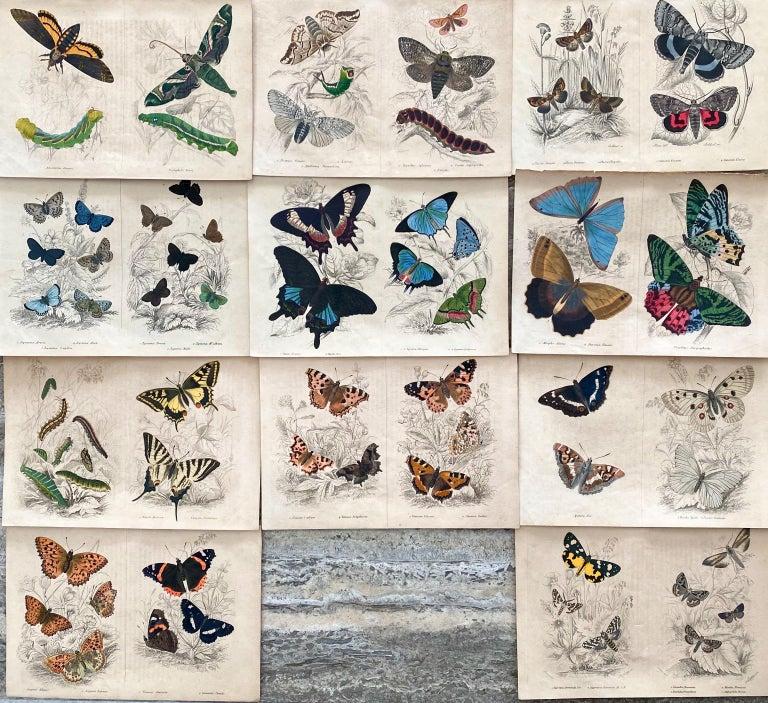 Sir William Jardine, 7th Baronet (after) Animal Print - Antique Prints Rare Exotic Butterflies - Tropical Colourful Set Butterfly
