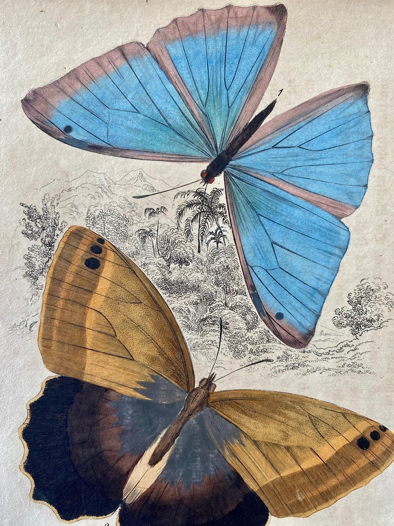 Antique Prints Rare Exotic Butterflies - Tropical Colourful Set Butterfly - Beige Animal Print by Sir William Jardine, 7th Baronet (after)