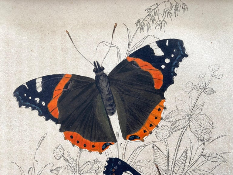Set of 22 hand colored prints (11 sheets) of rare & colourful butterflies. Published in 1840 based on the work of Scottish naturalist, Sir William Jardine, 7th Baronet.   Depicting amongst others a: South American Morpho adonis (neotropical