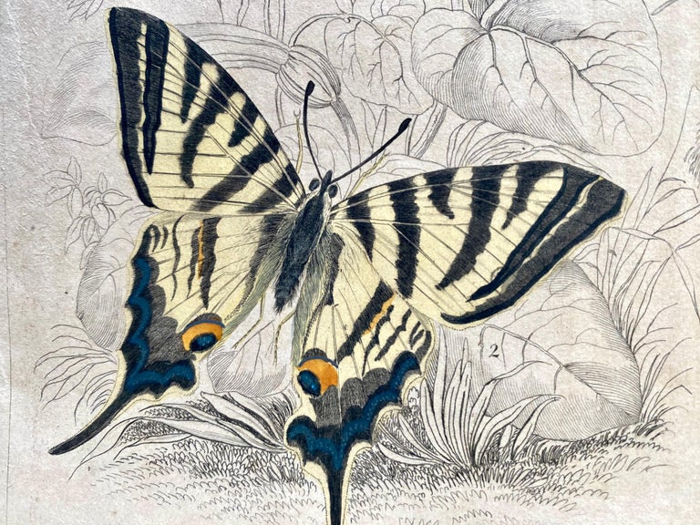 Antique Prints Rare Exotic Butterflies - Tropical Colourful Set Butterfly For Sale 1