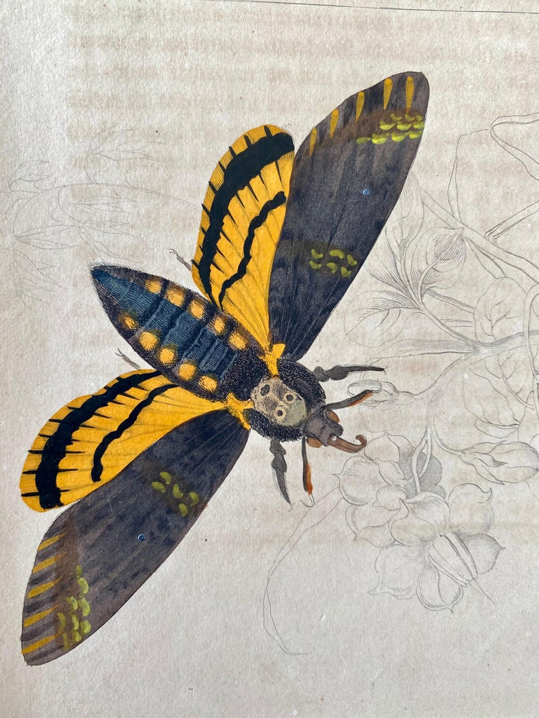Antique Prints Rare Exotic Butterflies - Tropical Colourful Set Butterfly For Sale 2